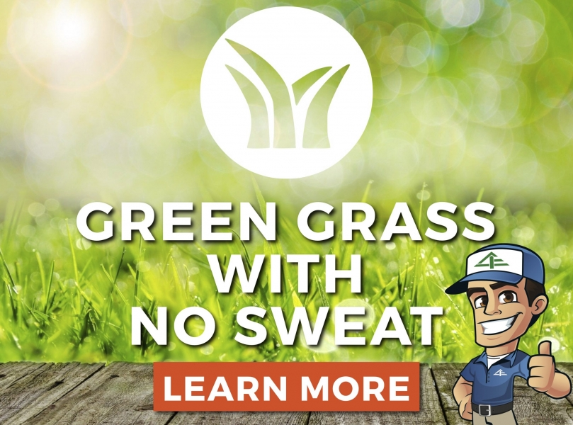 green grass with no sweat