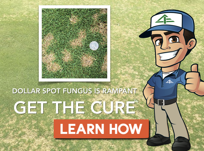 Dollar Spot Treatment